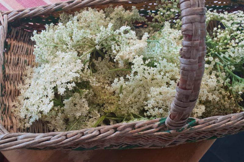 Daisy Cottage Farm Elderflower Cordial
