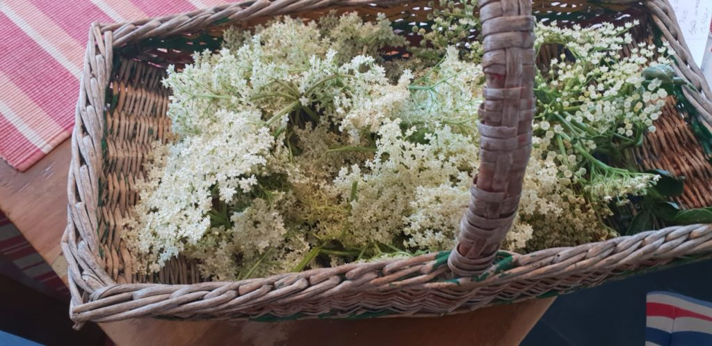 Fresh Elderflowers